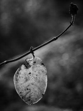 © Marianne Buer Olsen